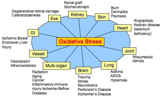 Understanding Oxidative Stress