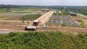 Ibom Integrated Farms: Unique in Many Ways
